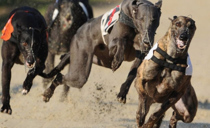 Irish Greyhound Derby