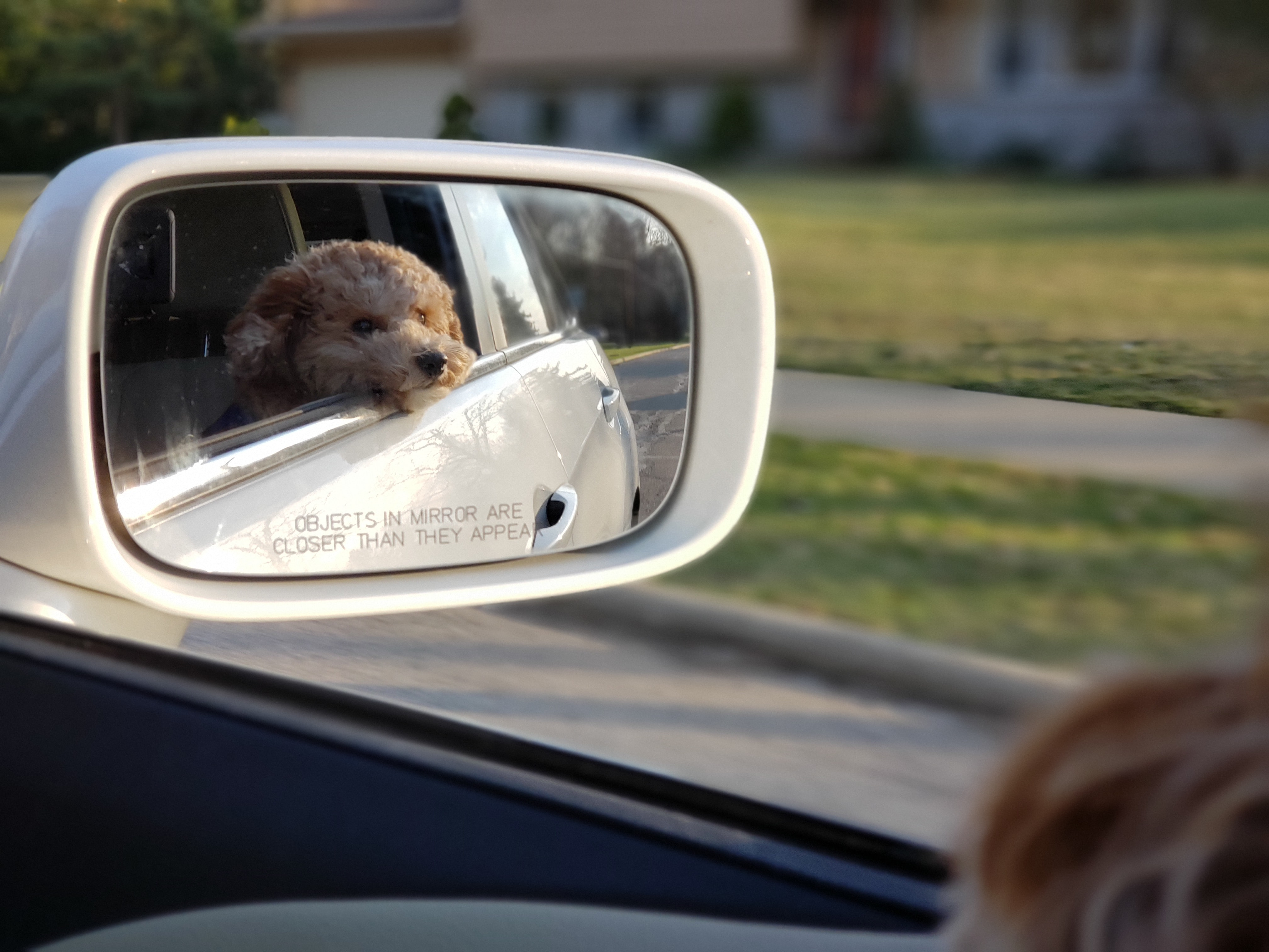 8 Tips for Traveling with Pets for A Safe and Fun Adventure