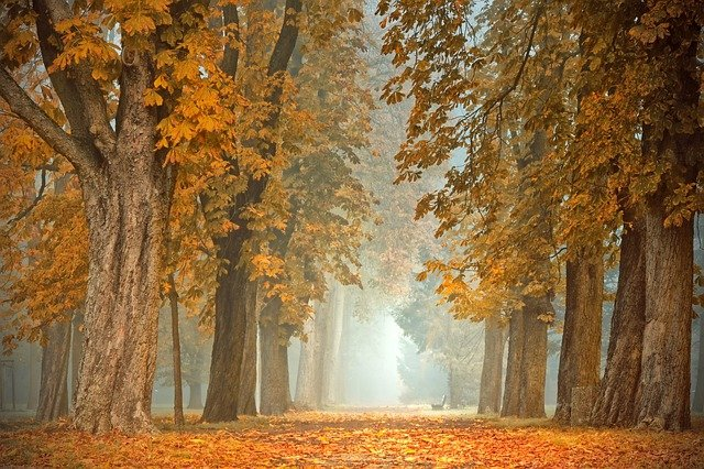 5 Ways to Prepare for the Fall Months