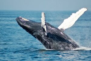 Amazing Whales - 10 Places Where You Can Spot Them